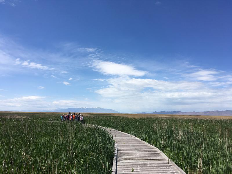 Wings and Water transforms the Great Salt Lake wetlands into a classroom where geology, biology and anthropology are only a few of the subjects that students can explore at the Great Salt Lake Shorelands Preserve.