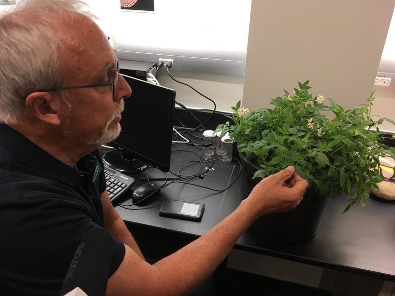 Red Butte Garden Conservation Director Bruce Pavlik helped track traces of a prehistoric tuber to colonies of living plants near an archaeological site in Escalante.