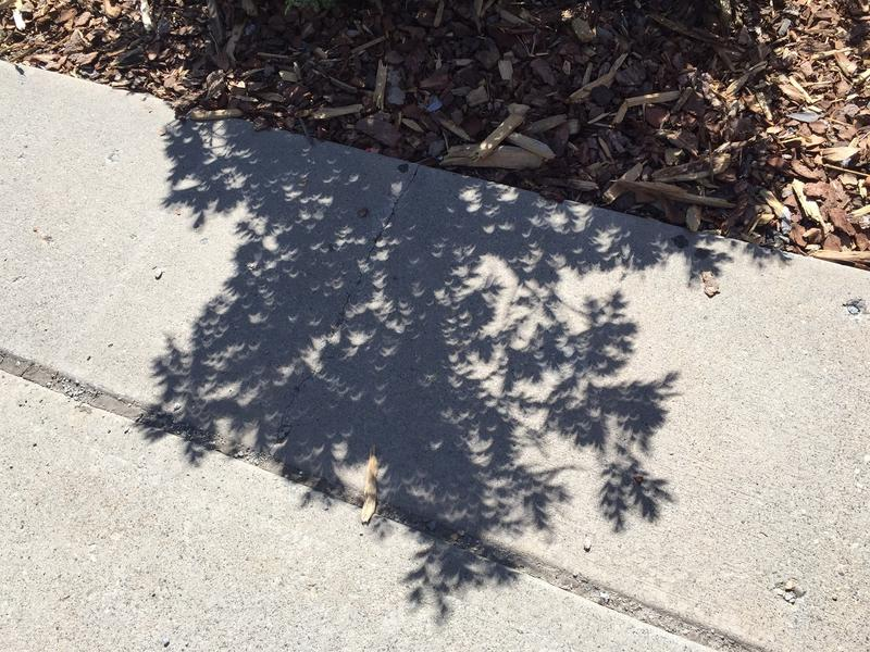 Shadows were projected as crescents through tree leaves and branches.