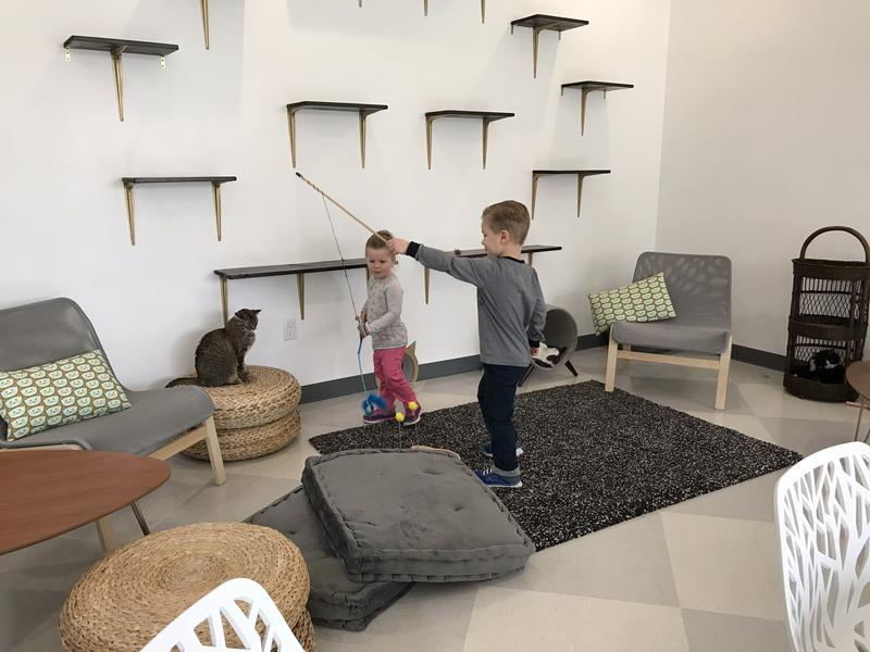 Kids play with cats inside the lounge at Tinker's Cat Cafe, Salt Lake's first animal-themed coffee shop.