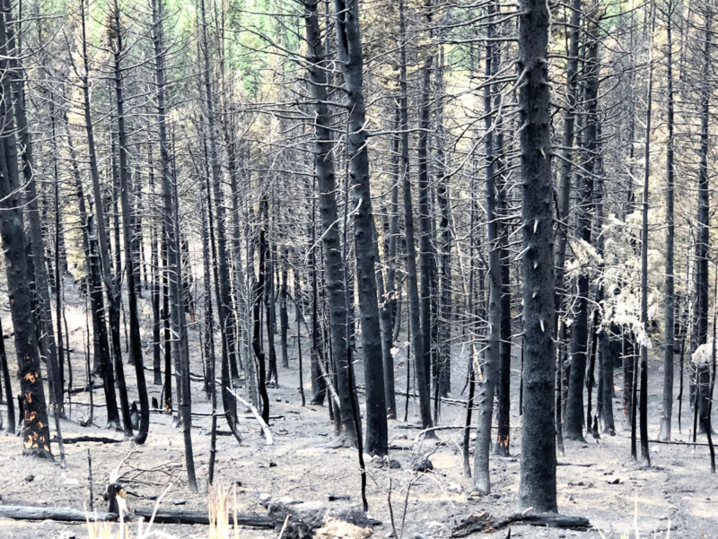 Photo of burnt trees.