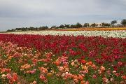 "Field in Carlsbad, California. Photo by <a href=""http://www.flickr.com/photos/jimfrazier/139374843/\"" target=\""_blank\"">Jim Frazier</a>"