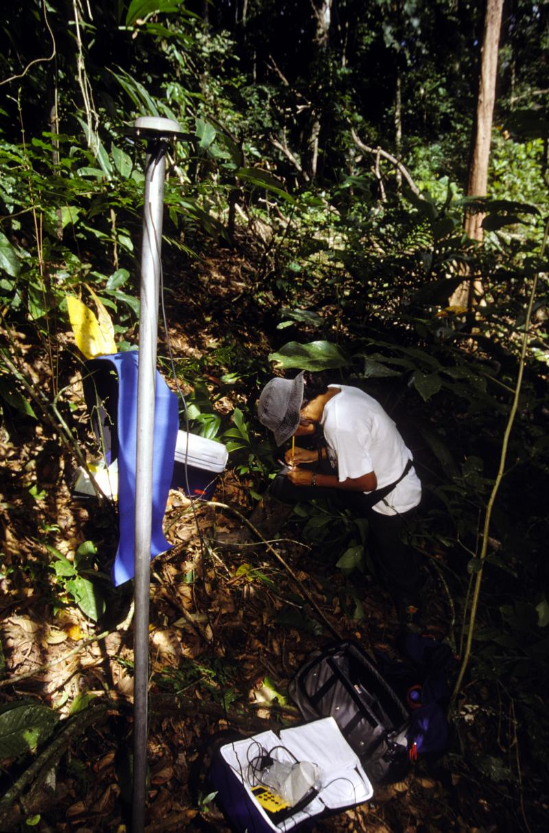 Botanist Nayda Flores collects samples on the island of Coiba, off the coast of Panama.