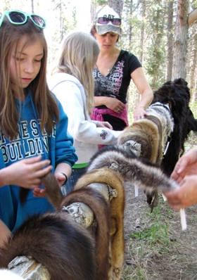 Swan River School 5th Grader True Gannon checks out the different animal pelts at the wildlife educational station at the 24th annual Family Forestry Expo near Columbia Falls.