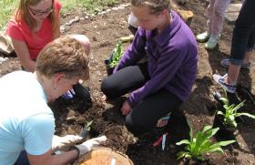 Students planting the first starts in the West Valley School Native Plant Garden.