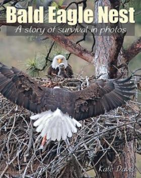 Bald Eagle Nest: story of survival in photos, by Kate Davis