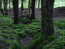 Moss in the Allegheny National Forest, Pennsylvania.