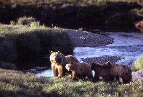 A family group in Yellowstone