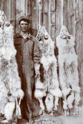 Wolf hunter Barney Brannin posing with part of the Cripple Foot pack taken on the Waite ranch in winter 1924-1925