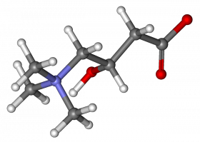 ball-and-stick model of the Carnitine molecule