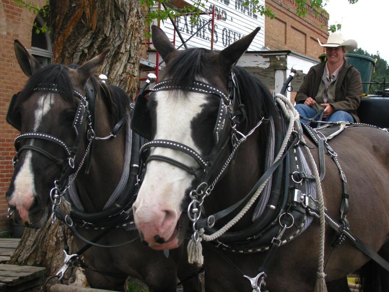 Stagecoach driver Lisa Morgan with her horses Pete and Paulie