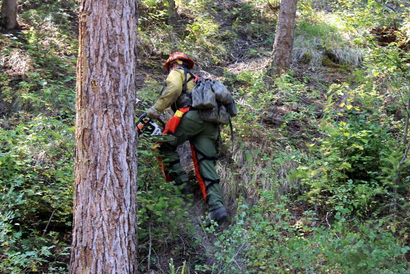 Michigan sawyer heading up Sleeman Gulch
