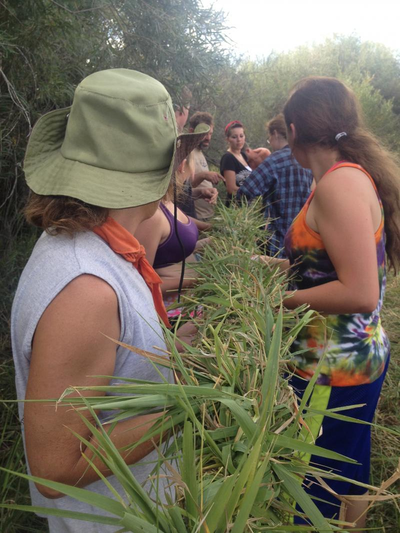 Students and teachers in the Project for Alternative Learning's 'Primitive Elements' class twist together a rope made of grass Thursday near Cardwell