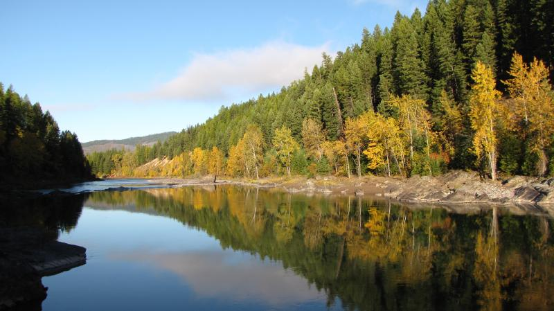 The cold waters of the Middle Fork of the Flathead River are somewhat buffered from the effects of climate change, but temperatures here, too are rising.