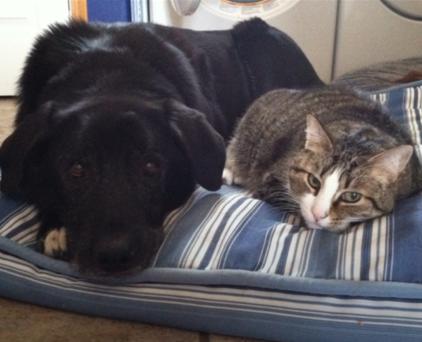 Jack the dog and Rhythm the cat