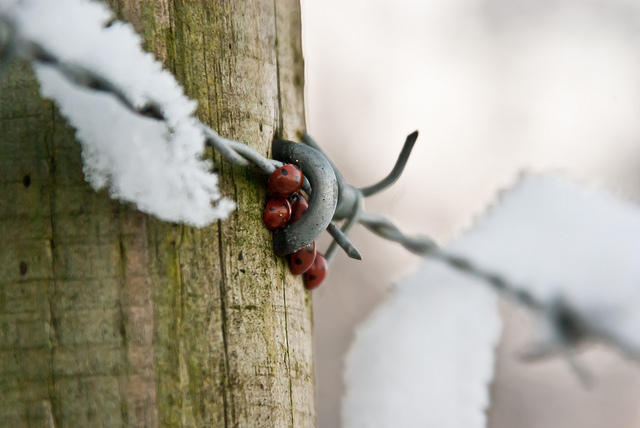 Image result for HYBERNATING INSECTS COLD WEATHER