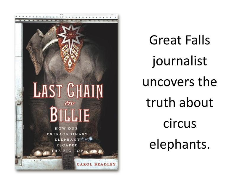 Last chain On Billie, by Carol Bradley