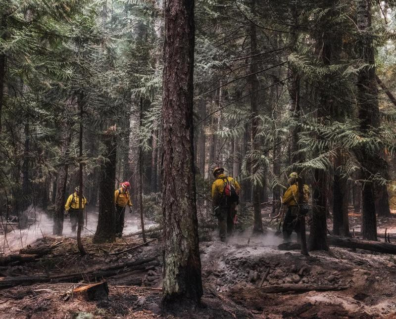 Firefighters mop-up hot-spots on the Clark Fork Complex.