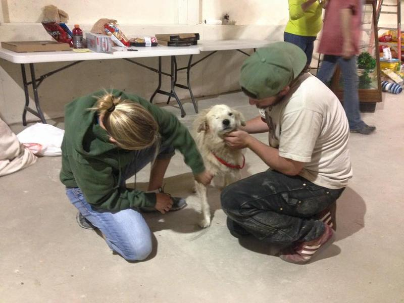 Volunteers look after a canine evacuee at the makeshift shelter in Browning.