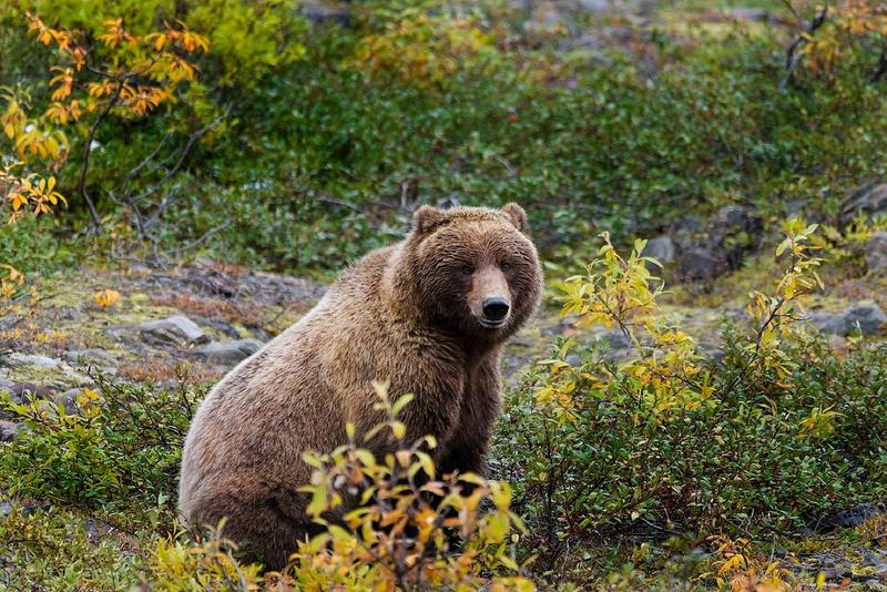 An off-duty Glacier National Park employee sustained non-life threatening injuries after surprising a bear in Glacier National Park's Swiftcurrent Valley Saturday evening.