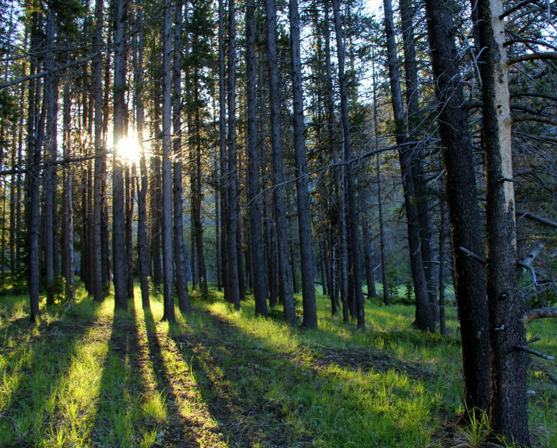 Recently merged three-million-acre national forest requires a new management plan.