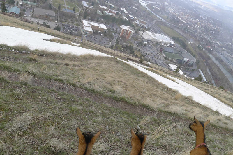 "Empathy, Intuition and Zoey: Empathy, Intuition and Zoey taking in the view of the ""M"" and the Missoula Valley"