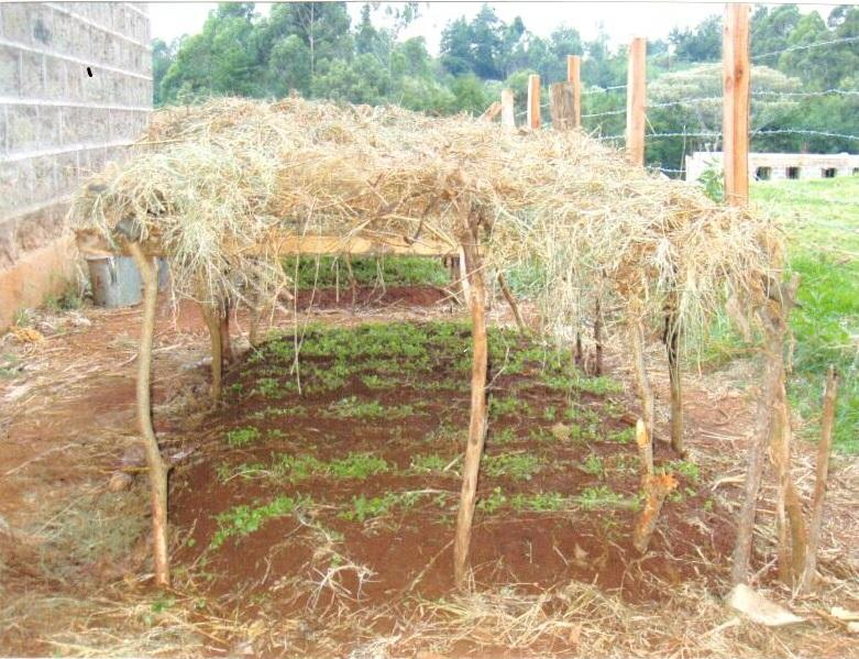 Young tree seedlings at Huho-Ini Secondary School destined to be planted as part of Wangari Maathai's  Green Belt Movement.