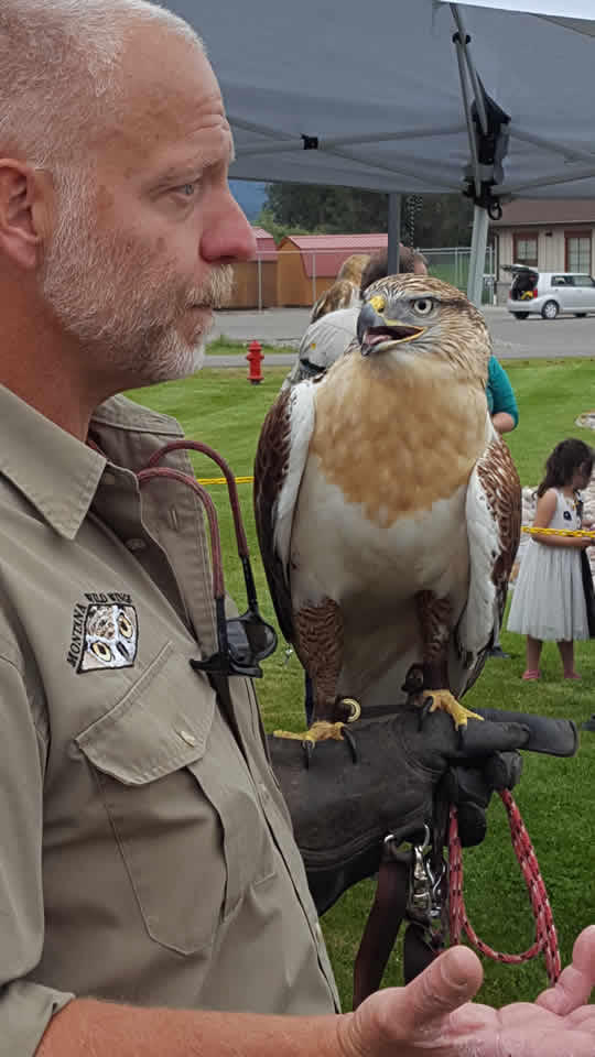 Biologist Byron Crow talks about falcons at the 2016 Community Bird Festival in Pablo, MT.
