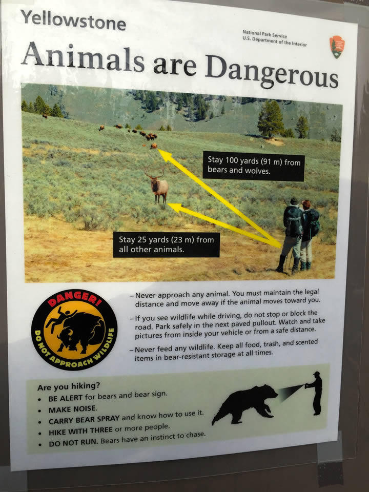 Signs abound in Yellowstone warning of the dangers of approaching wildlife too closely.