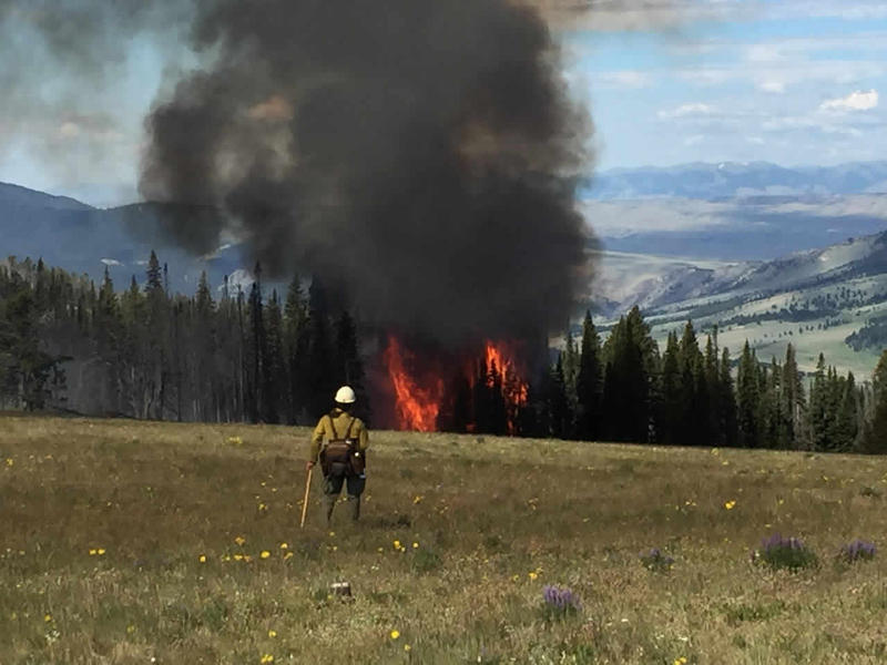 A firefighter looks on as trees burn in the Pole and Fine fires near Ennis, Montana July 3, 2016.