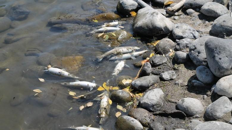 A fish-killing disease prompted the closure of 180 miles of the Yellowstone River and hundreds of miles of tributaries in August 2016.