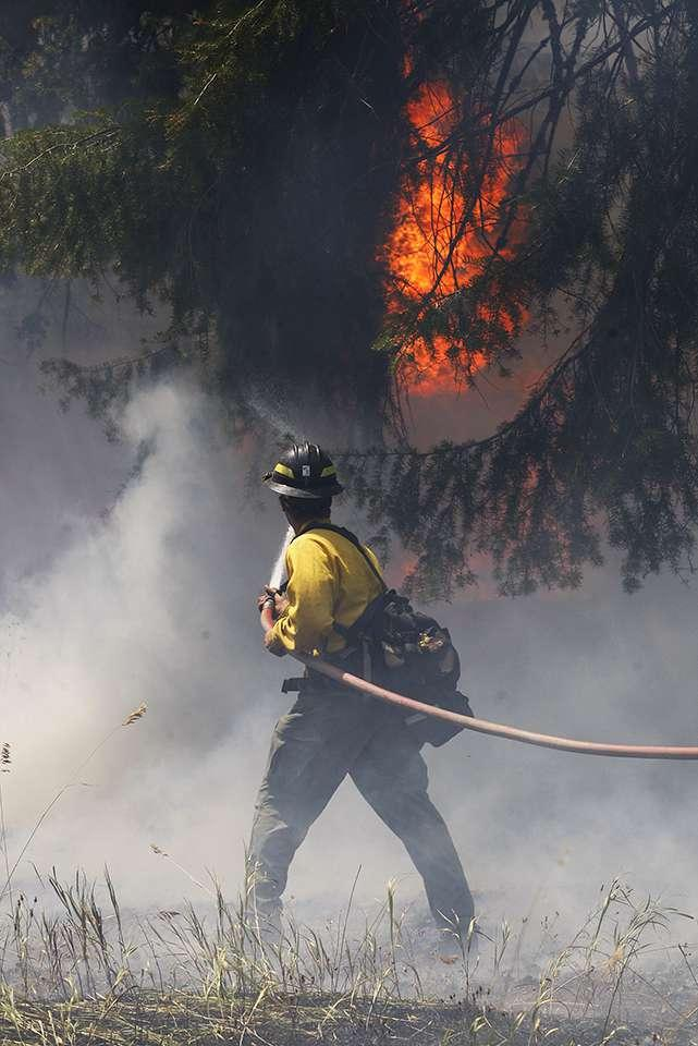 A firefighter works to control a blaze at the edge of back-burn on a private ranch near the Roaring Lion Fire, August 3, 2016.