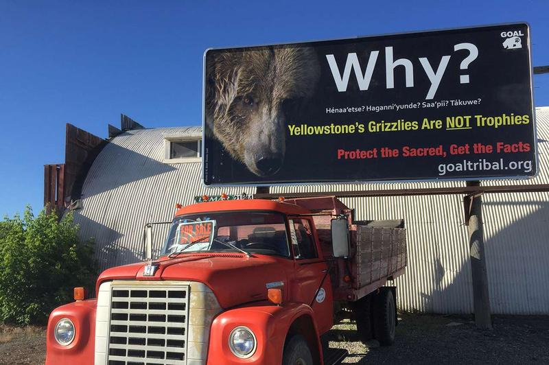 "A billboard spotted in Cody, WY on June 26, 2016 says ""Yellowstone's grizzlies are not trophies."""