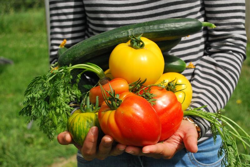 Community Groups Encourage Butte Gardeners To Share Their Bounty
