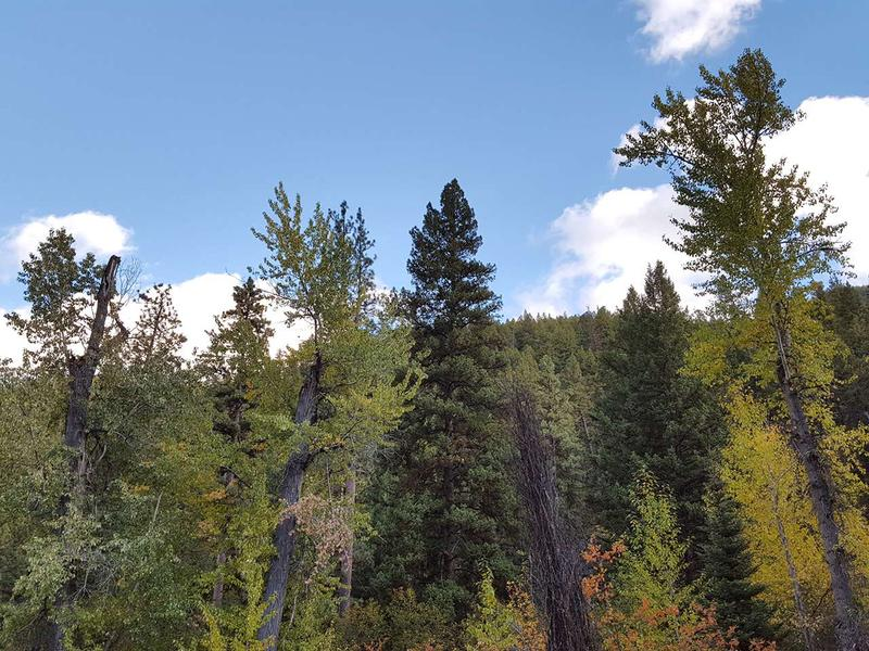 "Some write of ""conifers and deciduous trees"" as if they are somehow different. But, of course, when describing trees the words coniferous and deciduous may be distinctions without a difference."
