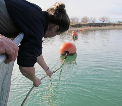 Fisheries biologists checking for adult invasive mussels.