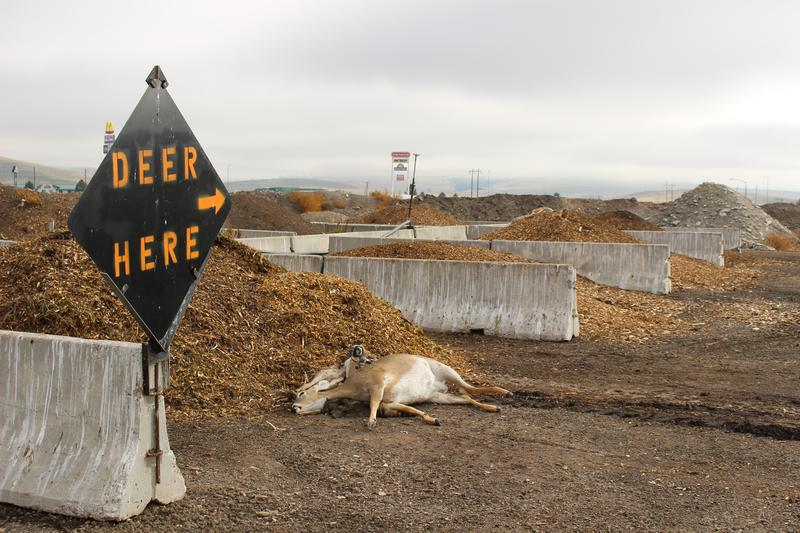 'Deer Here' sign at Montana Department of Transportation Composting Facility.