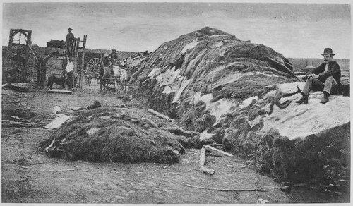 Buffalo hide yard in Dodge City, Kansas 1878.