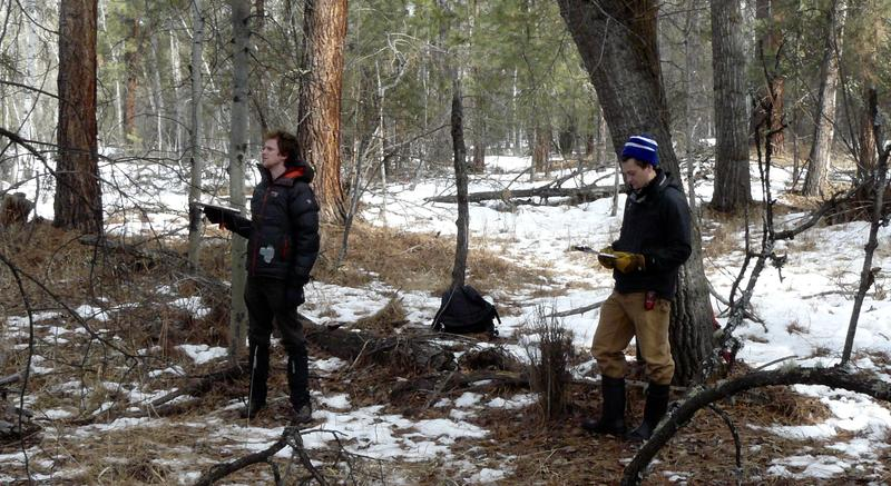 Researchers working at Sapphire Ranch near Lolo, MT, are trying to find out how deforestation affects bird alarm calls, February 25, 2017.