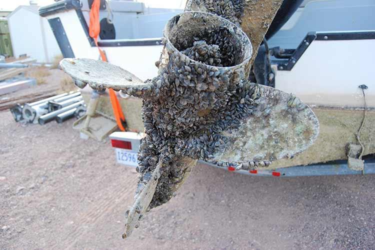 Boat propeller encrusted with invasive mussels.