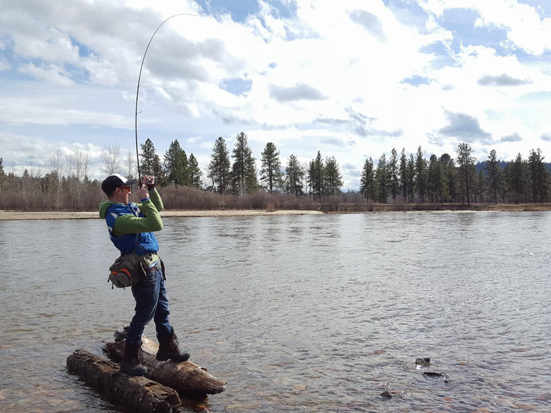A fisherman hooks a big one on the Clark Fork River.