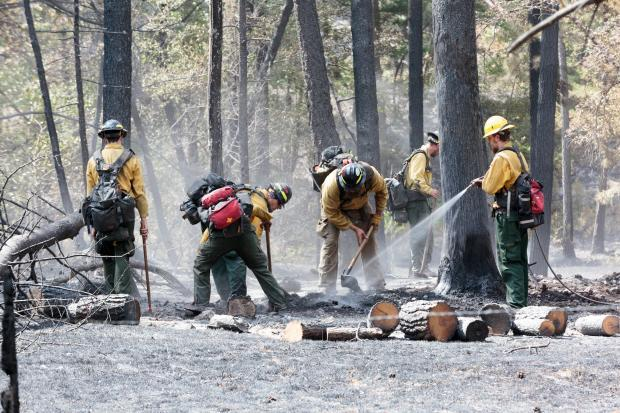 A firefighter was struck by a falling tree and killed while fighting fire in the Lolo National Forest Wednesday.