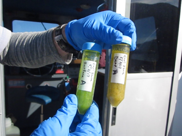 That green and brown gunk is a mix of algae, plankton and bits of genetic material that hold the answer to whether Flathead Lake has mussels in it. One sample comes from 9 meters deep, the other from the surface.