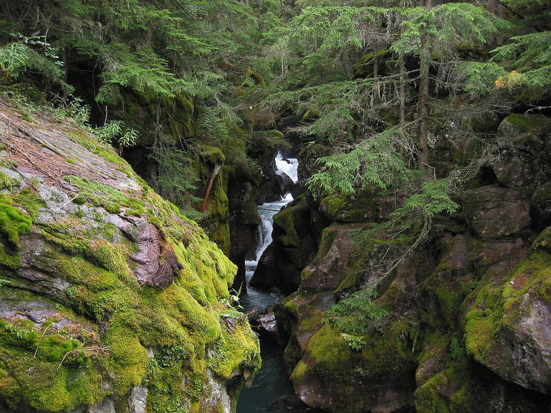 Avalanche Gorge along the Trail of the Cedars in Glacier National Park, Montana