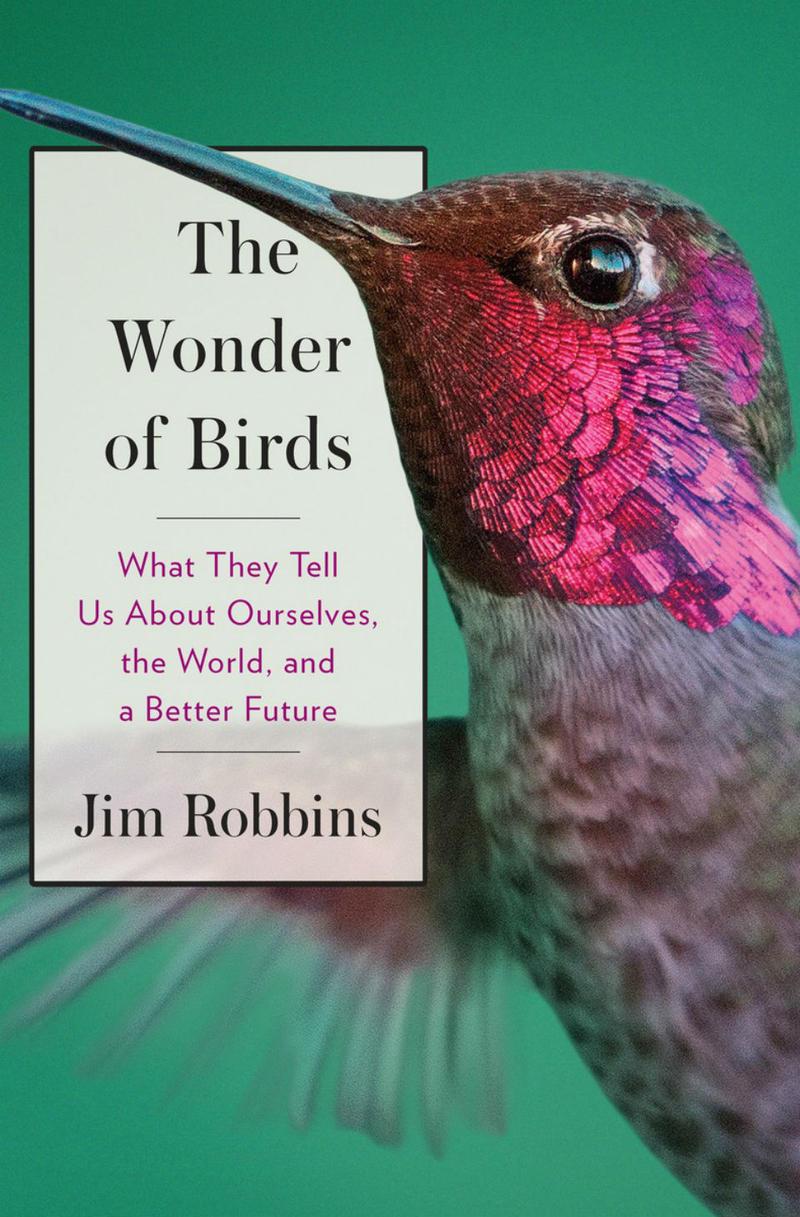 Deep dive into wonder with jim robbins mtpr the wonder of birds biocorpaavc Gallery