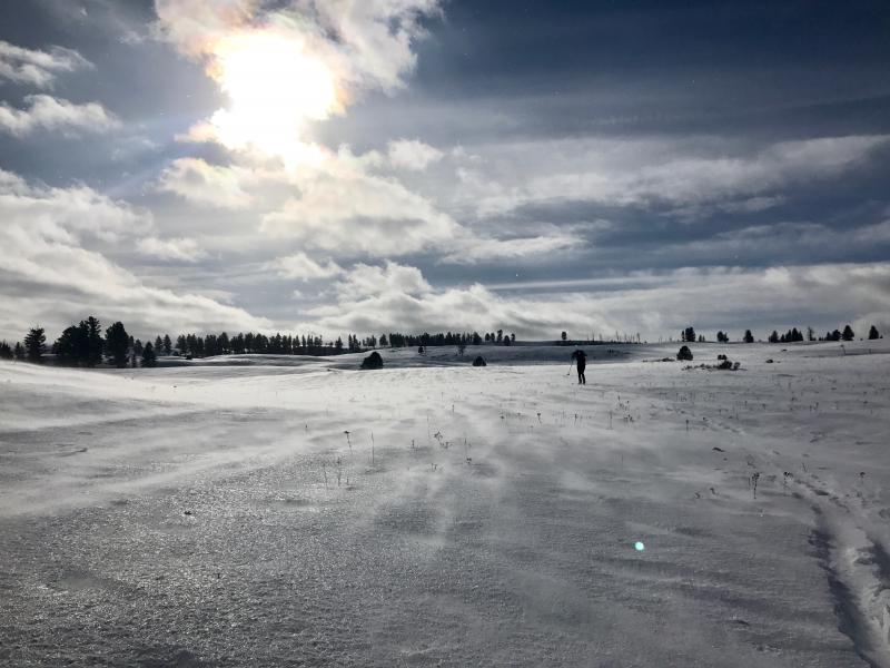A crosscountry skier in Yellowstone National Park.
