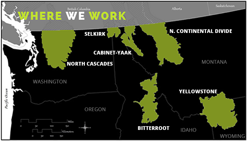 Grizzly bear recovery zones.