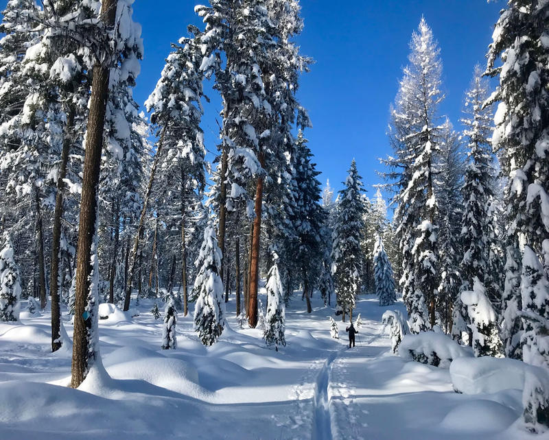 A ski trail near Seeley Lake, MT, January 2018.