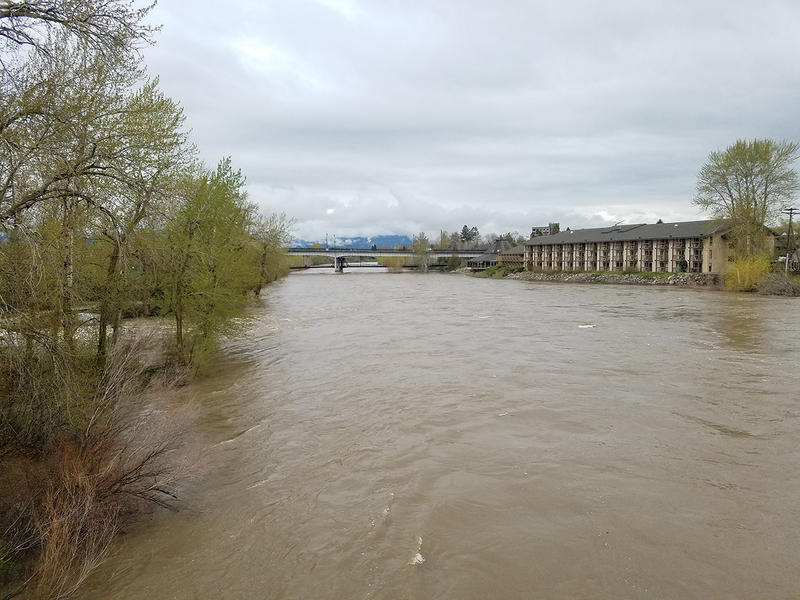 The Clark Fork River near the University of Montana Campus, April 30, 2018. The river has flooded parts of Missoula further west.