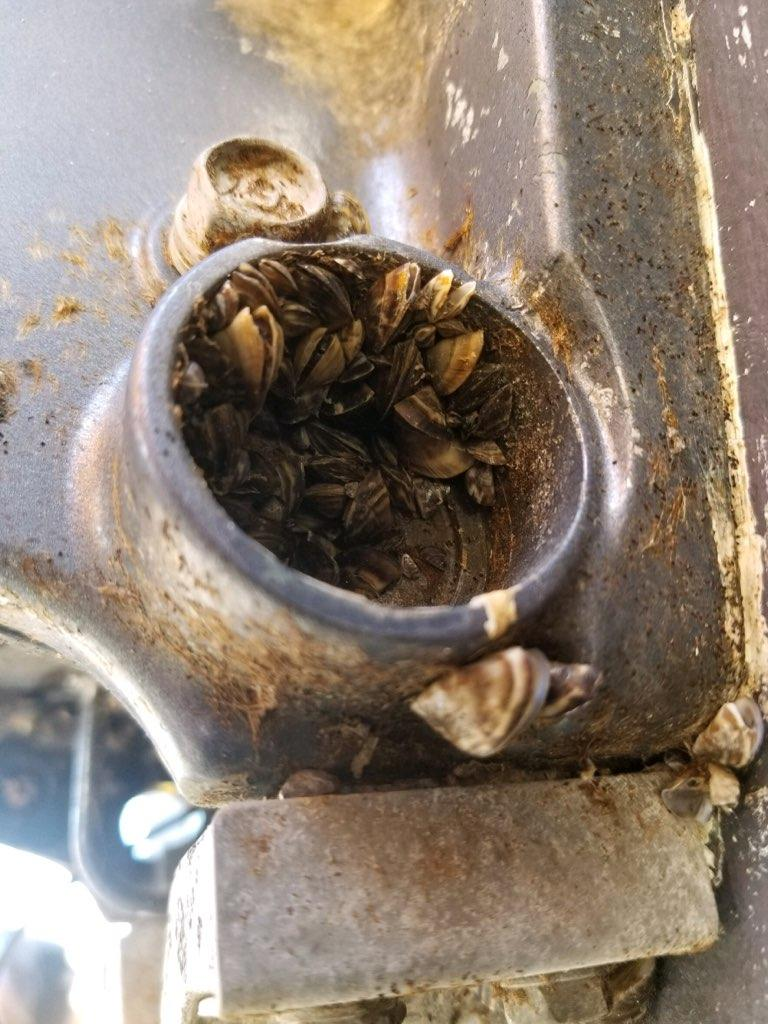 A boat carrying invasive zebra mussels was stopped at an Anaconda inspection station.